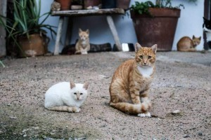 Care_4_Cats-1-of-1-5