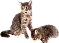 cat_PNG133