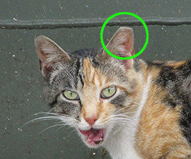 returning-healthy-feral-cats-2